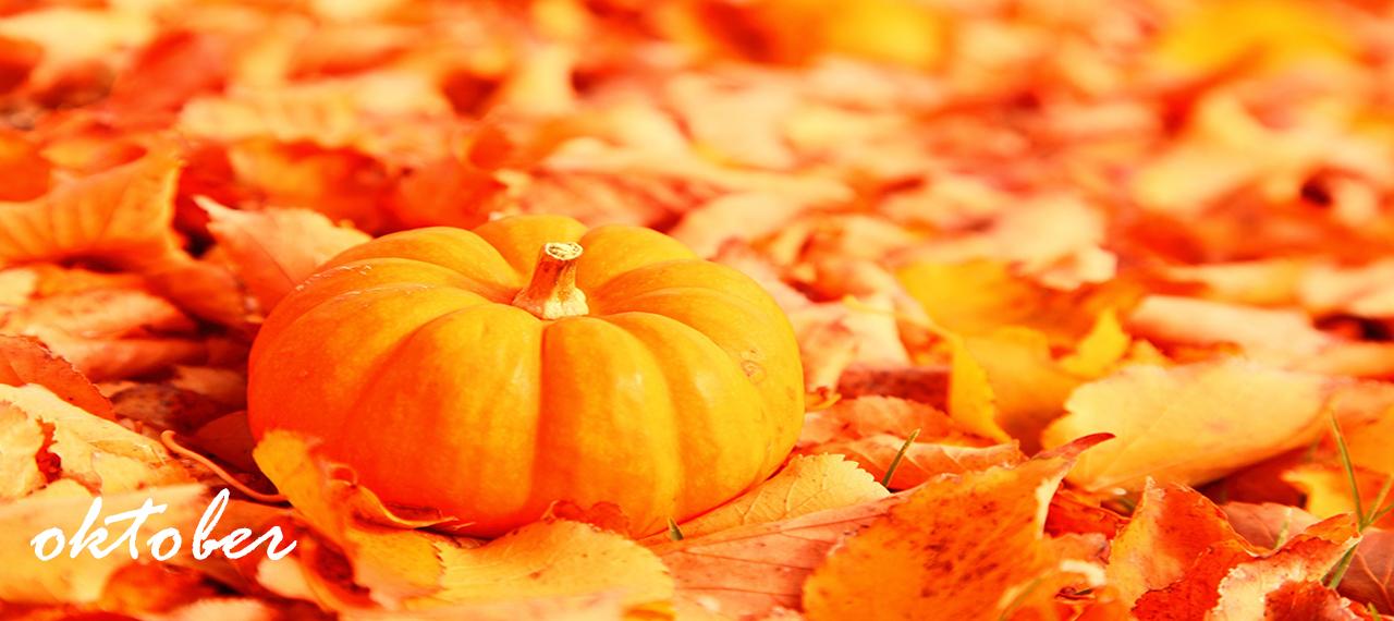 Kottenytt oktober